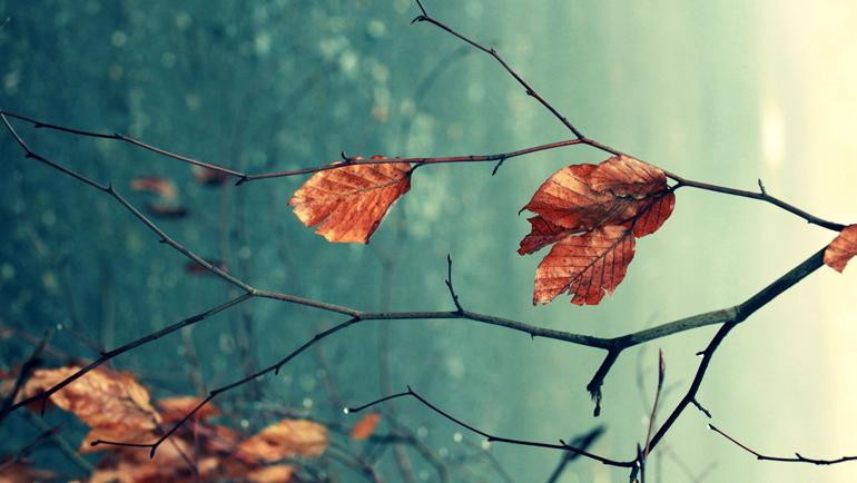 الفلسفة البيئية وأخلاق الأرض